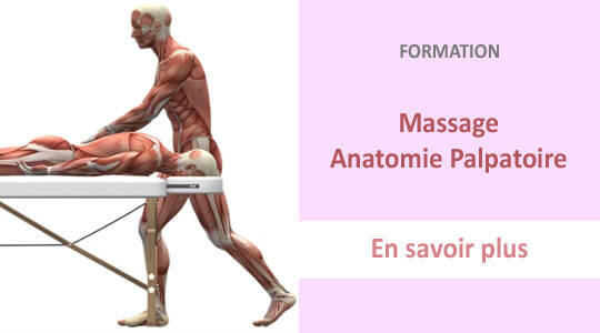 formation massage anatomie palpatoire